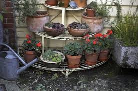 growing fall and winter container gardens tiered garden shelving with geraniums pelargonium and mixed houseleeks sempervivum late