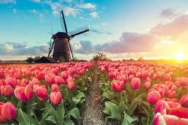 "Image result for ""welcome to holland"" poem"
