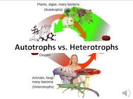 Autotrophs Vs Heterotrophs Youtube