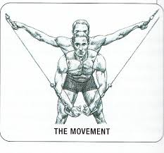 Image result for cable chest form