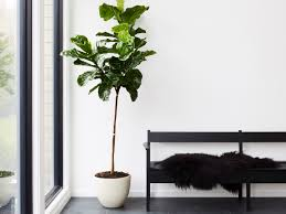 Interior Design Plants Inside House 13 Best Indoor Plants And How To Care For Them