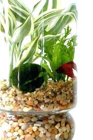 indoor tabletop garden tabletop garden tabletop water garden best indoor water garden ideas on water plants
