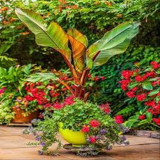 How To Care For Container Gardens In Cold Weather  The English GardenContainer Garden Ideas Uk