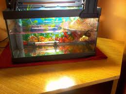 Il mio nuovo mini acquario