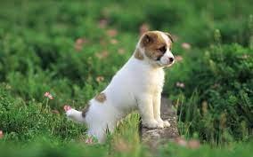 Pretty-Dog-wallpaper-puppies-free-hd ...