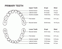 Teeth Numbers Chart Usa Teeth Numbers Chart Usa Teeth Numbers Chart Us Awesome