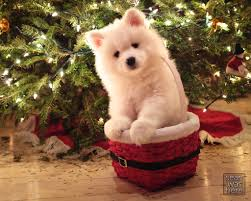 What's more photogenic than a puppy in a basket in front of a Christmas tree .