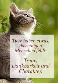 Pin Von Franzi Lindesey Auf Cats Katzen Zitate Katzenliebe Zitate