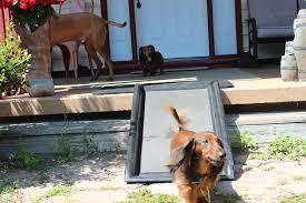 outdoor dog ramp design
