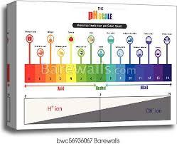 Universal Indicator Ph Color Chart Universal Indicator Ph Color Chart Best Picture Of Chart