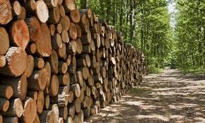 Illegal Logging Portal
