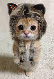 cute kittens in costumes. Plain Kittens Little Wolf Kitten So Cute To Cute Kittens In Costumes Pinterest