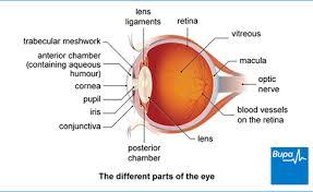 types of age macular degeneration