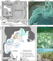 Megaherbivores May Impact Expansion Of Invasive Seagrass In