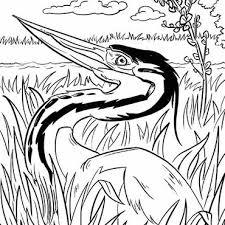Ijsvogel Kleurplaat Wat Is De Ijsvogel Een Prachtig Dier Na Veel