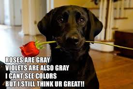 Image result for valentines day with animals pic