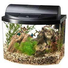 office desk aquarium. Plain Aquarium Aqueon Mini Bow Desktop Aquarium Kit On Office Desk