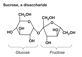 carbohydrate structure and function