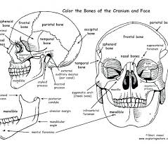 Human Anatomy Coloring Pages Human Anatomy Coloring Pages Human Body
