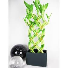 feng shui plants for office. Full Size Of Bathroom:good And Feng Shui Plants Money Plant In Bathroom Bedroom Fearsome For Office F