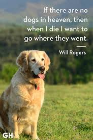 30 Dog Quotes That Every Animal Lover Will Relate To Best Dog Quotes