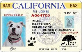 Image result for pet license