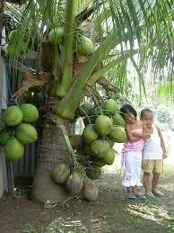 100 Varieties Of Local Mangoes Available In Kerala U2013 My World Of WordsKerala Fruit Trees