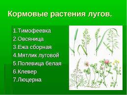 Растения луга Рассказ детям Реферат на тему растения луга