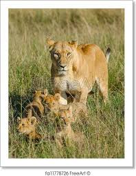 lioness and 4 cubs. Interesting Lioness Free Art Print Of Lioness With 4 Cubs In And Cubs