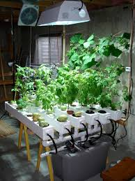 Hydroponics Herb Garden Kitchen Hydroponic Grow System Minha Fazendinha My Little Ranch