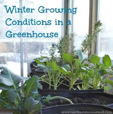 winter growing is not the same as winter harvesting there are several winter growing conditions