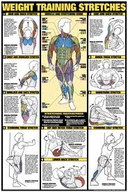 Weight Training Stretches Poster Laminated Fitness