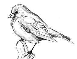 birds drawing tumblr. Plain Tumblr Nice Flying Bird Drawing Tumblr With Birds N