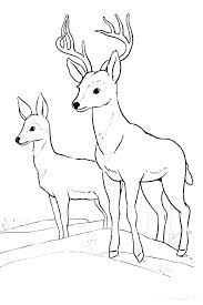 Wildlife Animal Coloring Pages Wildlife Coloring Pages Forest