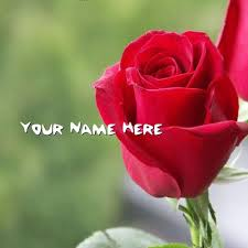 Get Your Name In Beautiful Style On Red Rose Picture You Can Write Inspiration Ww Nem Litu Imeg Dwlod