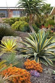 Succulent Garden Designs Cool Succulent Hillside Variegated Furcraea L Agave Desmetiana