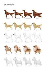 Dog Haircut Chart Dog Grooming Charts Google Search Dog Grooming Styles