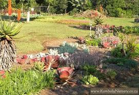 Succulent Garden Designs Custom Create A Successful Low Cost Succulent Garden Kumbula Indigenous