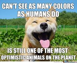 Optimistic Dog Sees The Bright Side On Everything by ... via Relatably.com