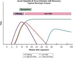Hep B Serology Chart Hepatitis B