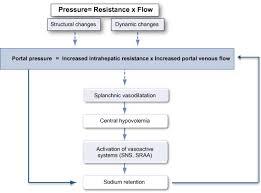 Pathophysiology Of Liver Cirrhosis In Flow Chart Diagram Of Pathophysiology Of Portal Hypertension The