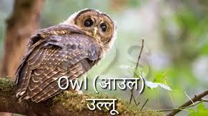 Hindi Birds Name Chart Birds Name Hindi And English With Image