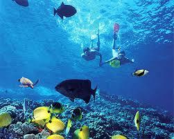 Islas Marietas Images?q=tbn:ANd9GcTYN2gI6GiacT1xx9bkzMxdXNCsdWxw8es0KQVk9710AFgHiYFq