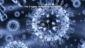 3 Types Of Passive Transport The 3 Types Of Passive Transport By Olivia Manfull On Prezi