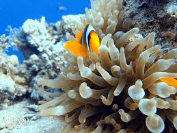 Sharm El Sheikh Diving Guide For Scuba Lovers