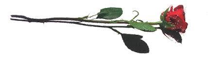 Image result for خطوط جداکننده کبوتر