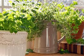 kitchen herb garden with lemon balm sage parsley and thyme