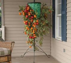 indoor tomato garden. Indoor Tomato Garden How To Grow Tomatoes Indoors 11 Steps With R
