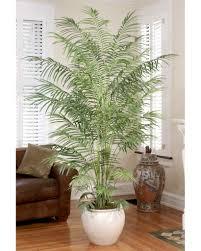 Palm Tree Decor For Living Room Interior Daccor After The Holidays Petalscom Blog