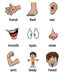 Details About Body Parts Flash Cards With A4 Board Velcro Kids Preschool Autism Sen Adhd